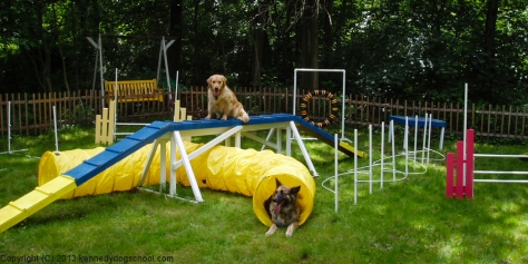 dog training portland oregon - agility