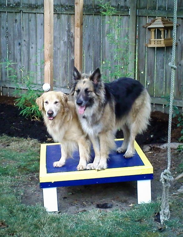 Sadie and Willie share the agility table.